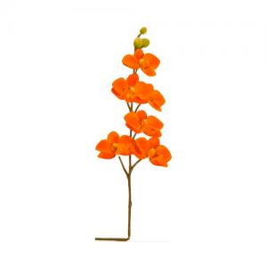 roseaux-orchidee-orange